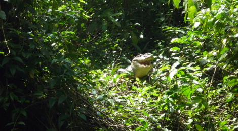 catching up II - my trip to the Tortuguero National Park